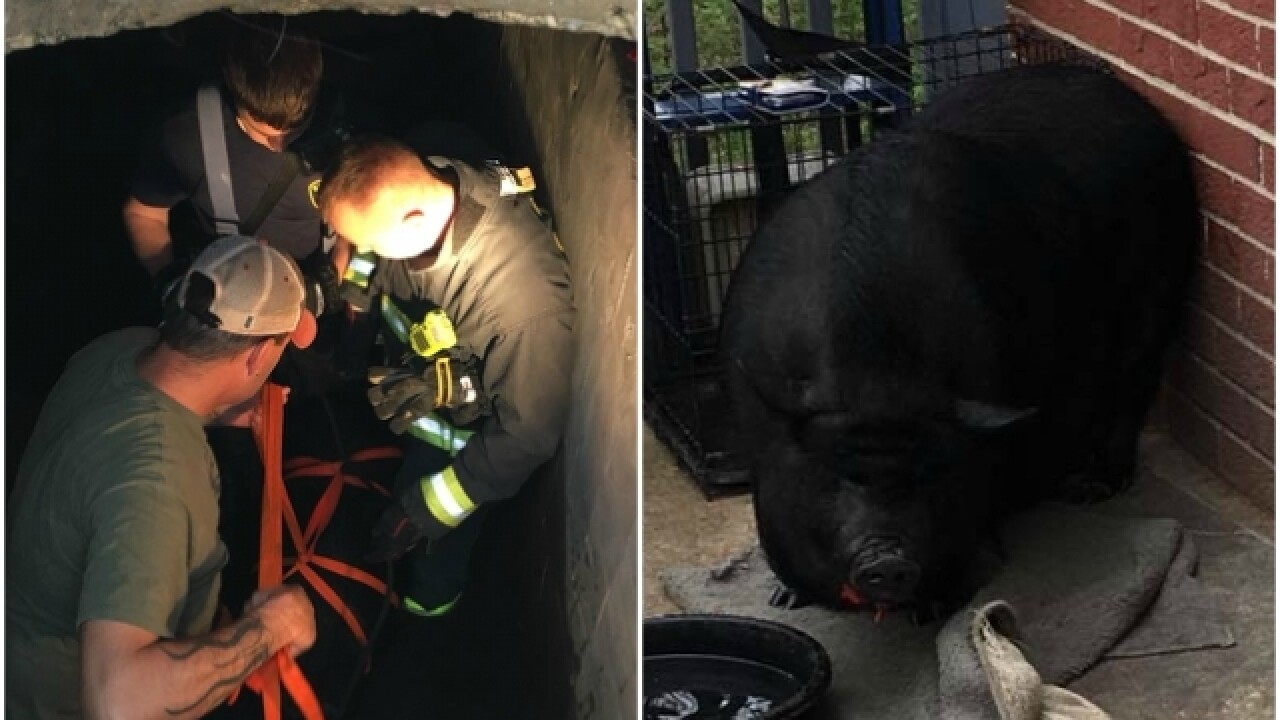 Goshen Township firefighters help rescue big pig from cistern
