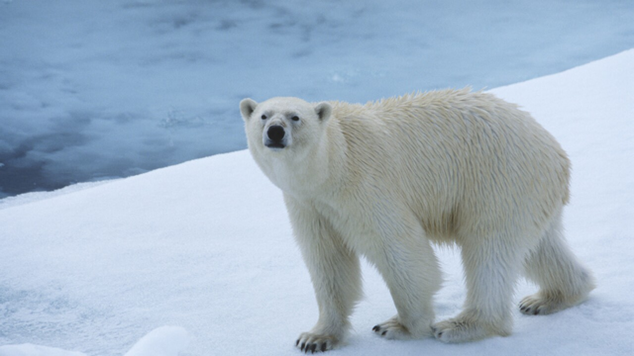 Former Milwaukee County Zoo polar bear dies