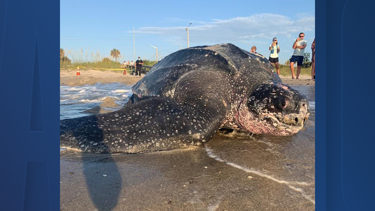 leatherback-turtle.png
