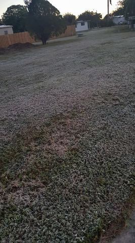 Photos: Frost in Southwest Florida on December 11, 2017