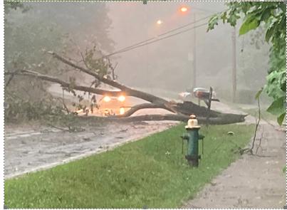 Westlake tree down.png