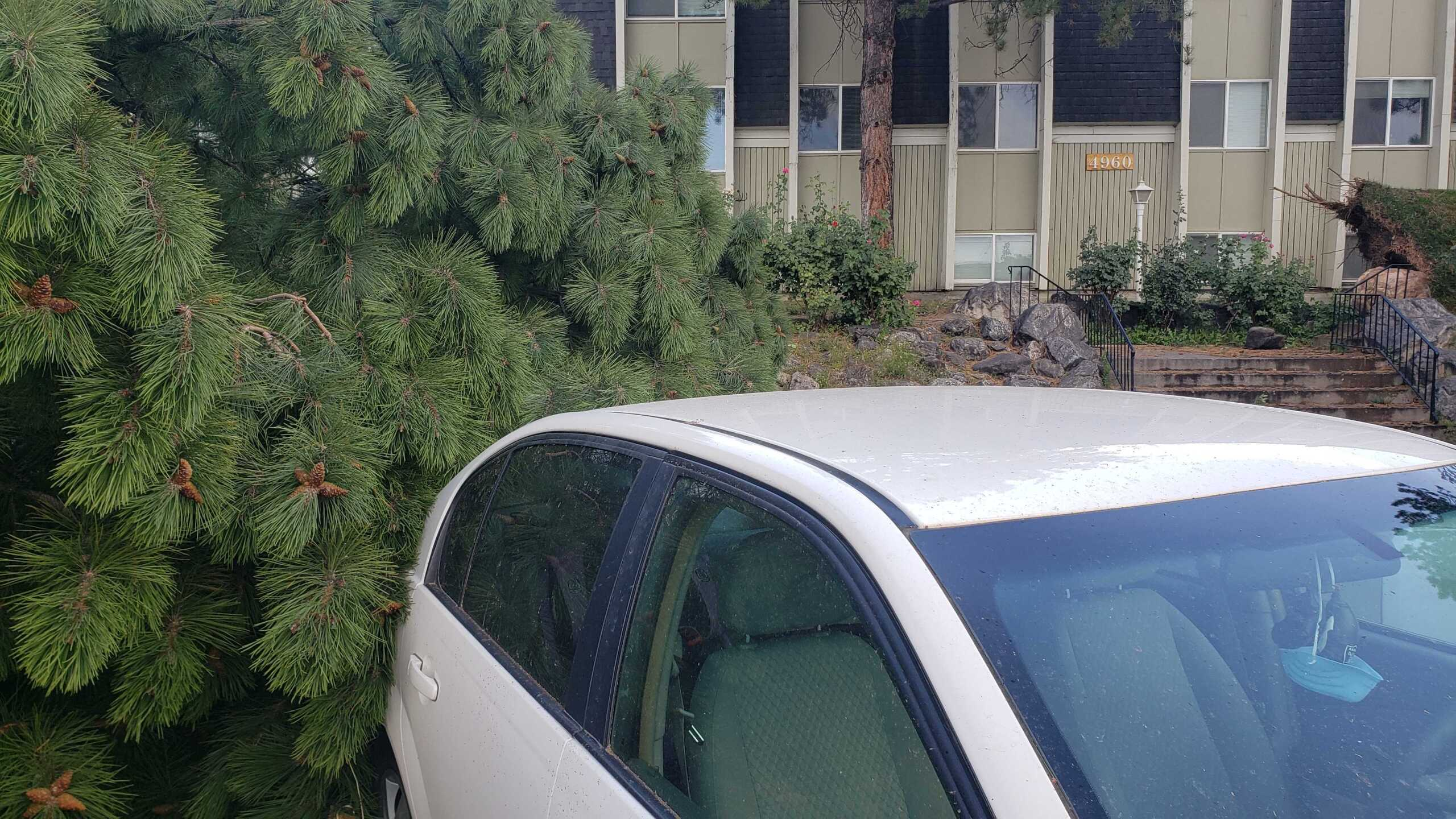 Wind Damage in Ogden (2).jpg