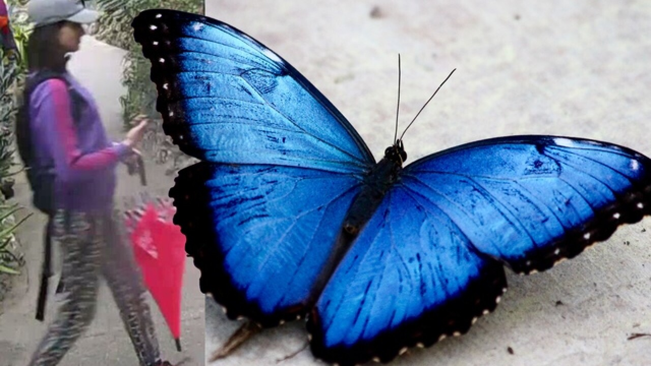 Police search for woman who stole butterfly