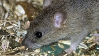 Mouse on airplane delays international flight for 4 hours