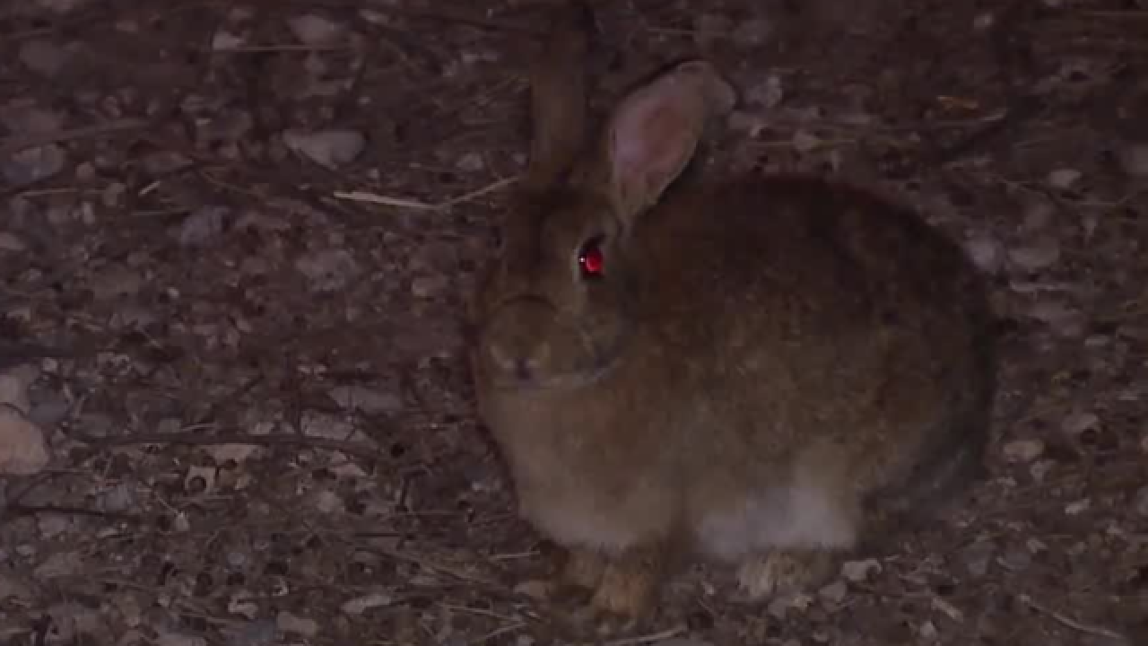 State, bunny advocates at odds over rabbit issue