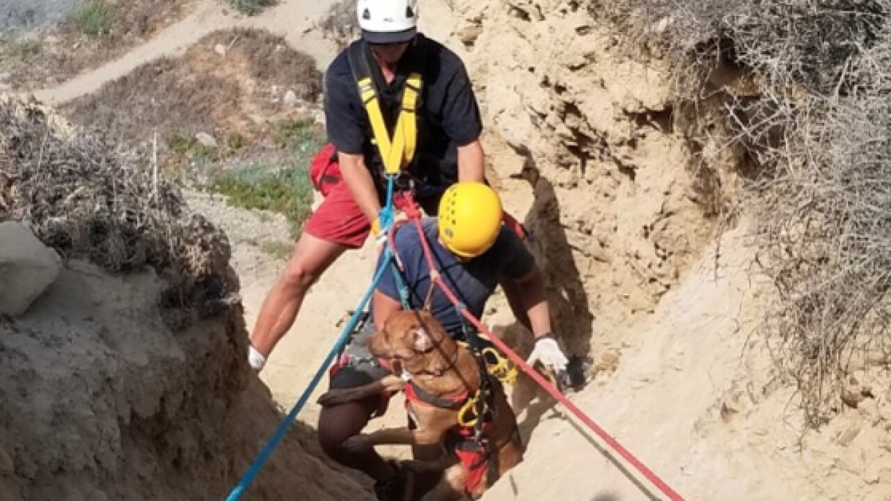 Lifeguards rescue dog, owners from Blacks Beach