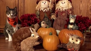 Yes! Pics: Pumpkin Carving and Decorations