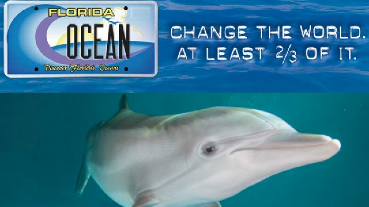 Love Winter the Dolphin? This Florida license plate helps the nonprofit that rescued her