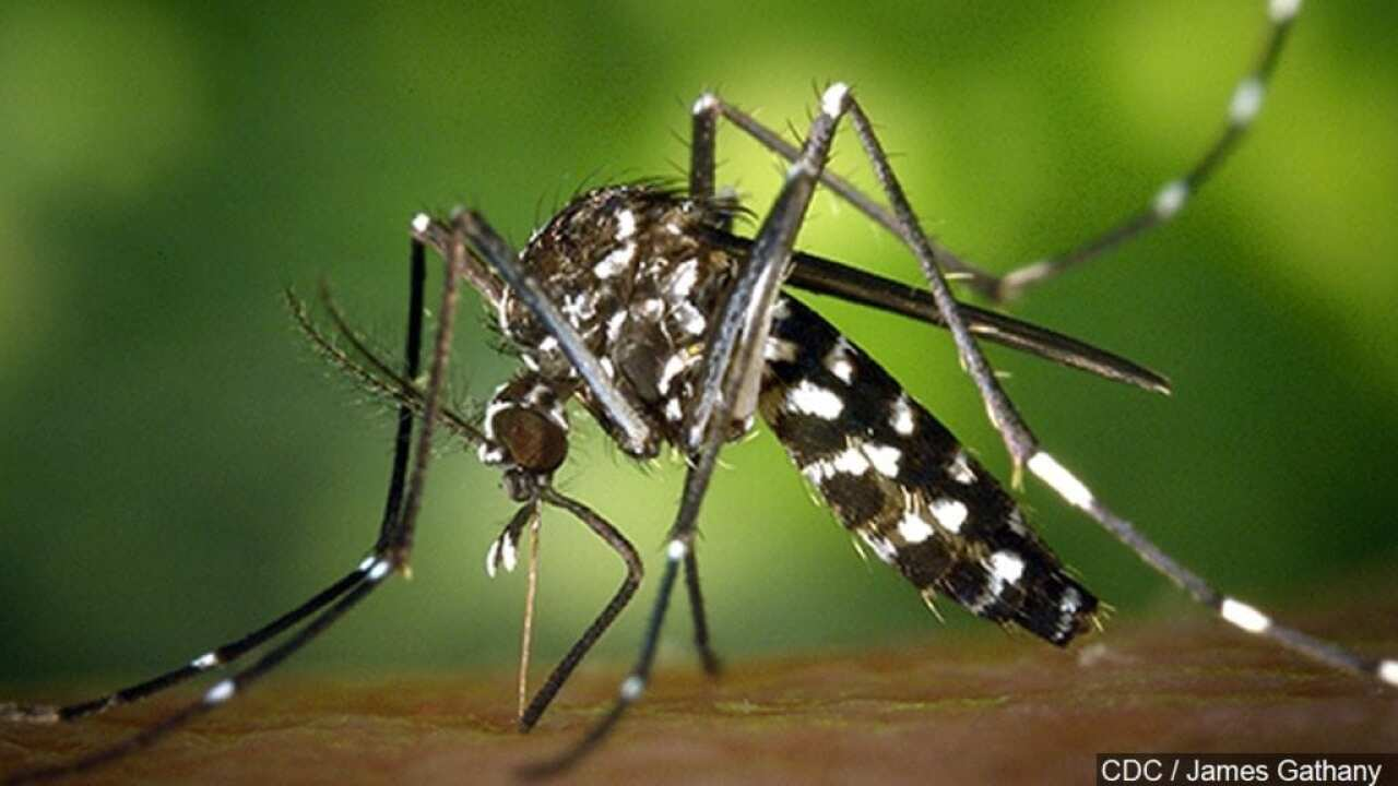 City will begin spraying mosquito spraying tonight on North Beach