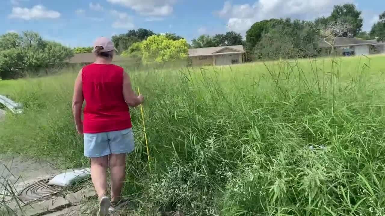 Tall grass southside.jpg