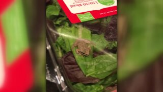 A family found a living frog in a carton of organic salad greens