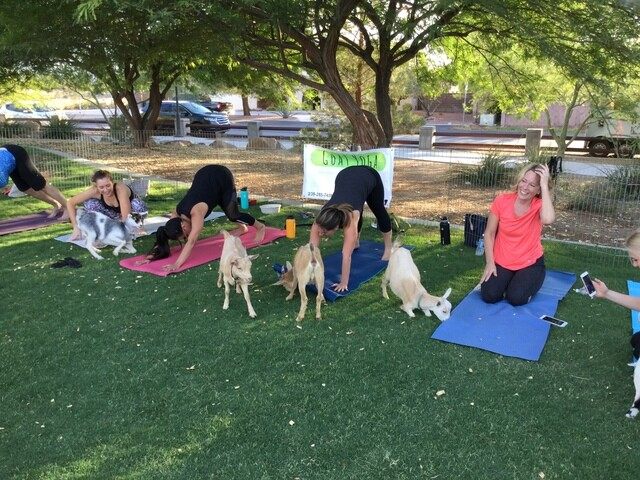 PHOTOS: Goat Yoga Las Vegas