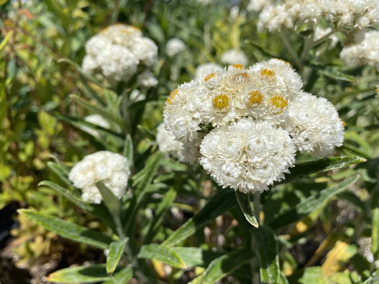 Water conservation tips: Xeriscaping