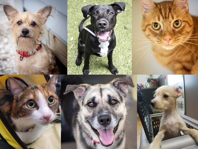 PHOTOS: 20+ adoptable pets in the Tampa Bay area for the weekend of August 1