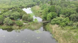 Walking Club: Exploring Boyd Hill Nature Preserve