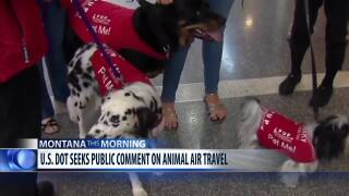 Public comment wanted on proposed changes to rules about the air transportation of animals