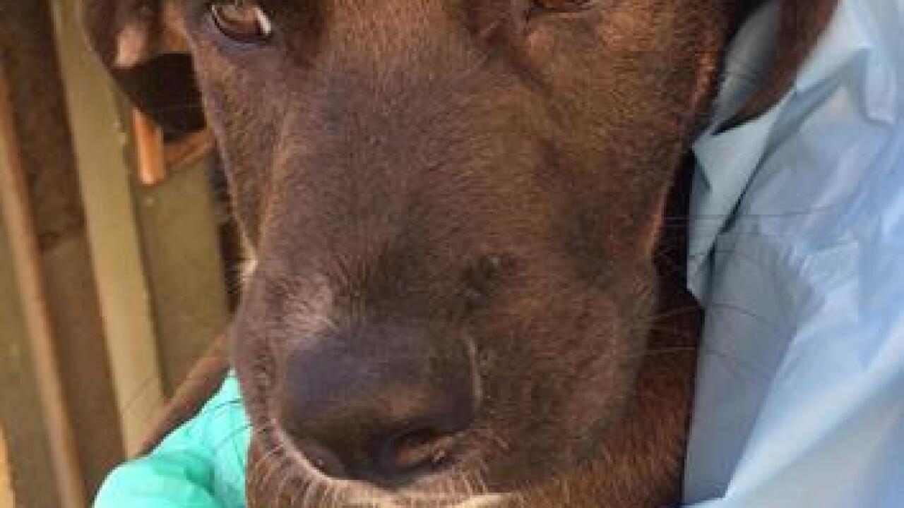 'Hurricane Harvey' dogs up for adoption