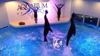 Aquarium of Niagara offering virtual education programming