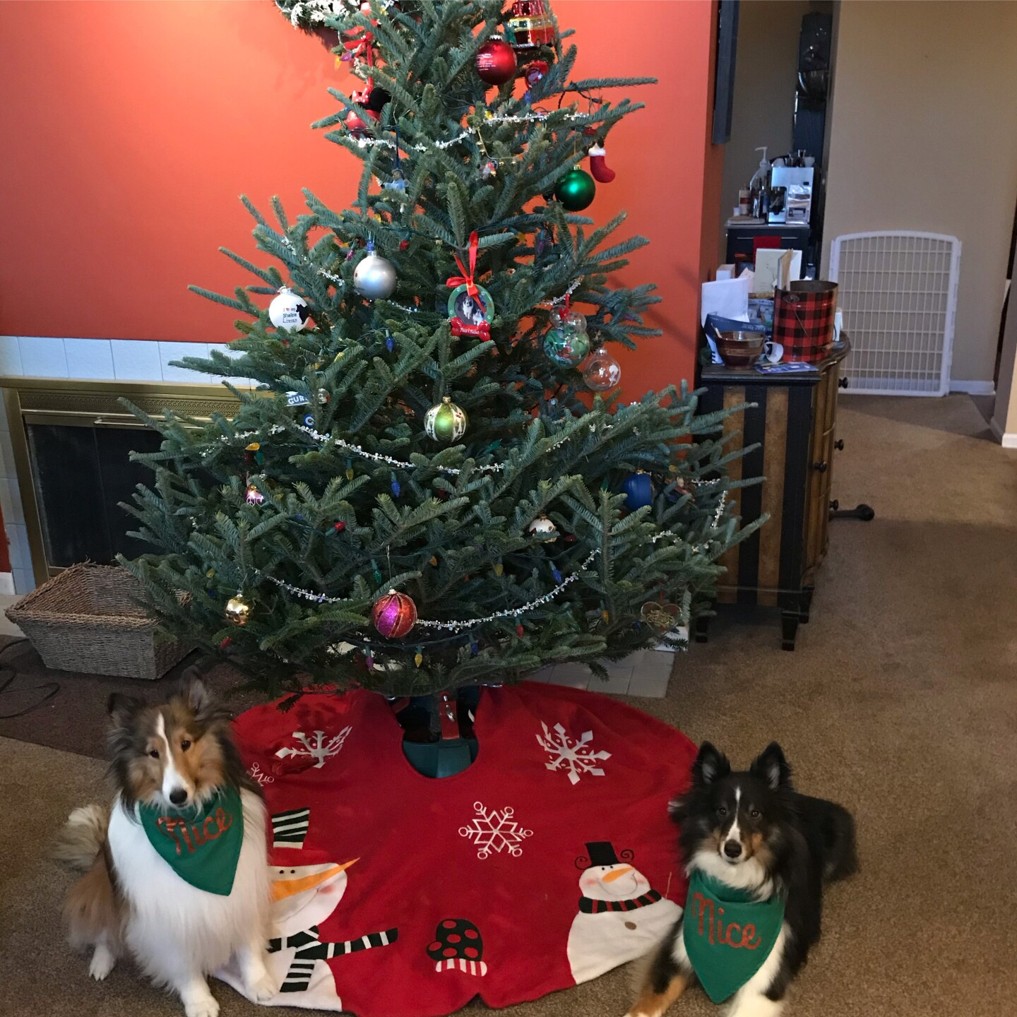 Rocket and Posie say Merry Christmas sent by Mark McElwee.jpeg