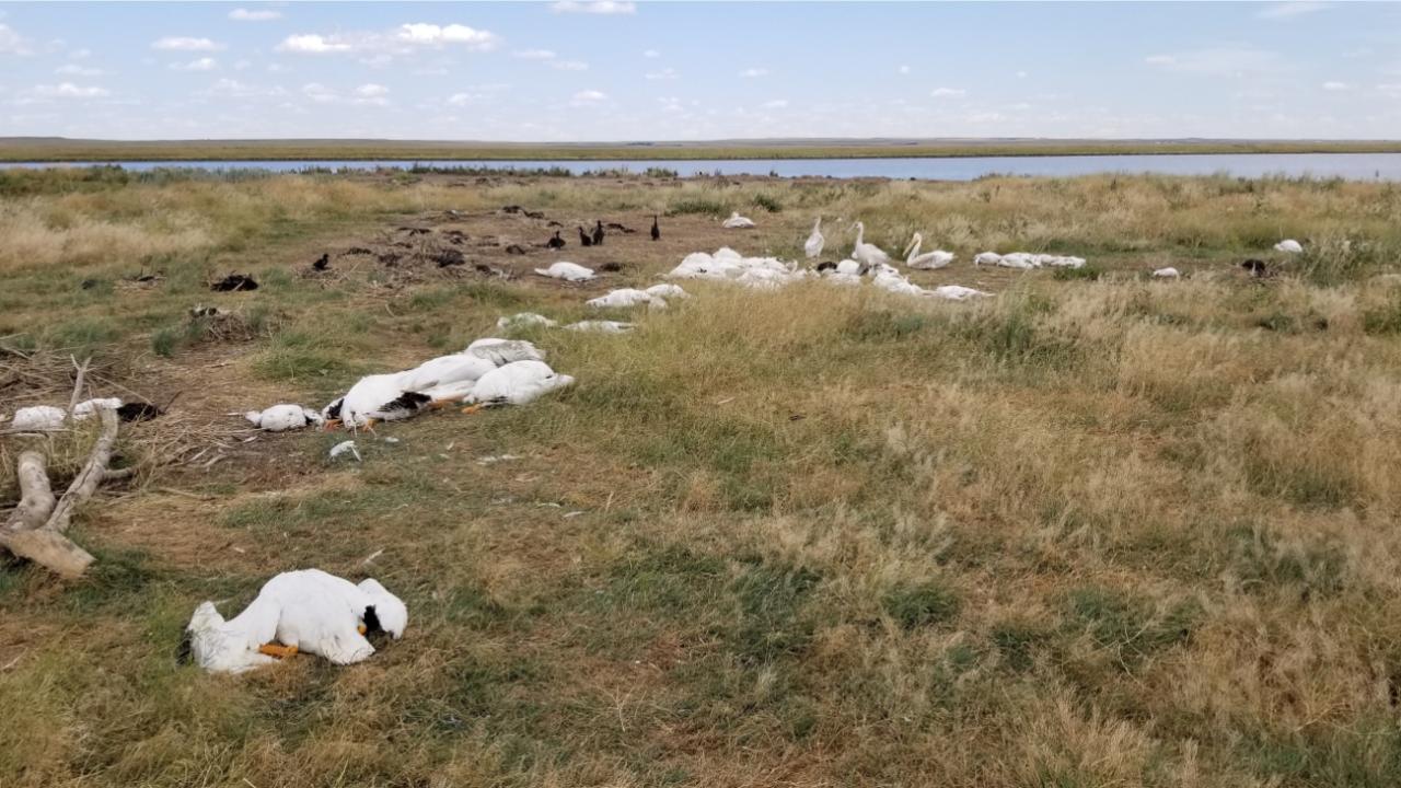 dead birds.PNG