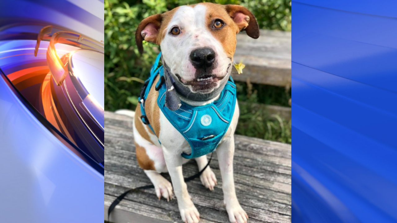 Virginia Beach dog shot in the face recovering well