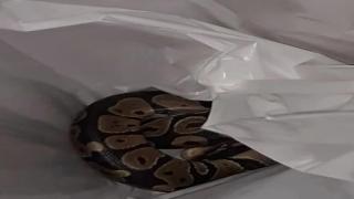 Python found in Floriad woman's washing machine