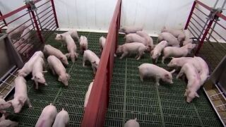 Montana Ag Network: Secure Pork Supply Plan