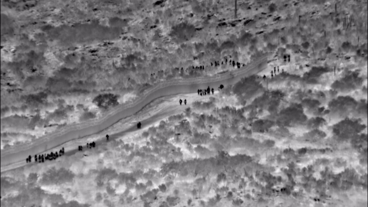 2019-06-14 Indian migrant-infrared.jpg