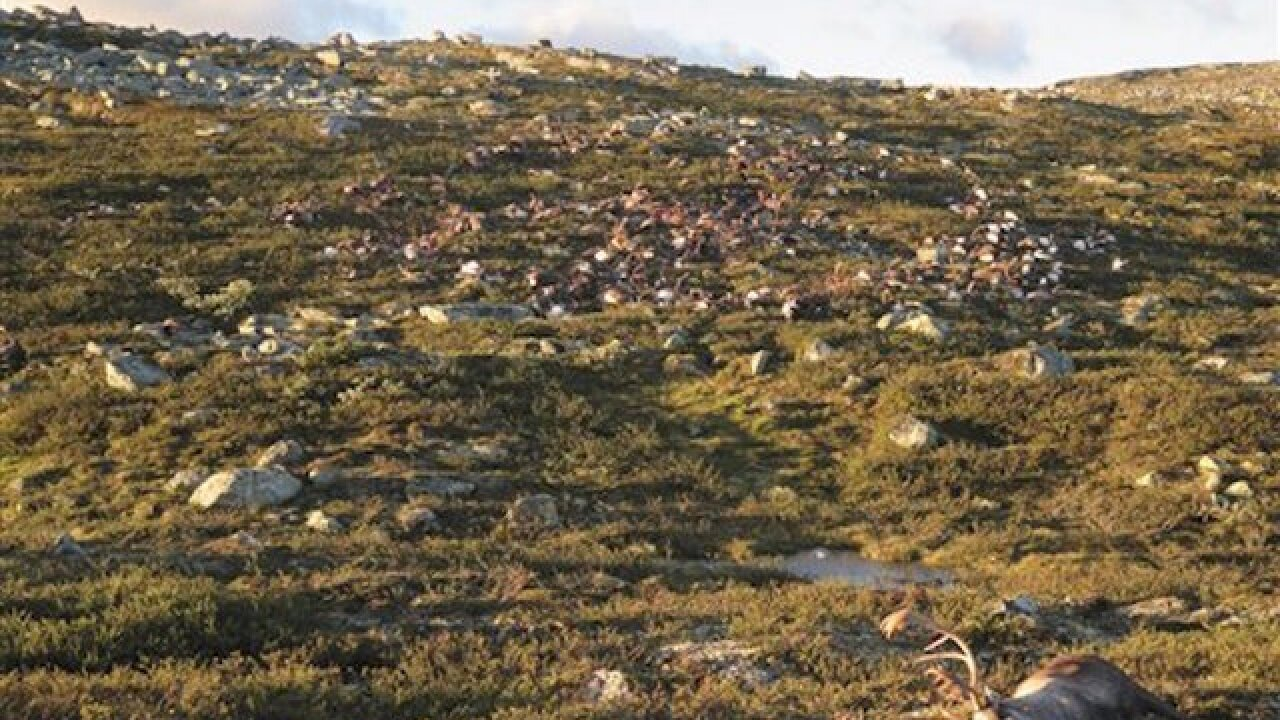 Strange lightning strike kills 300 reindeer in Norway