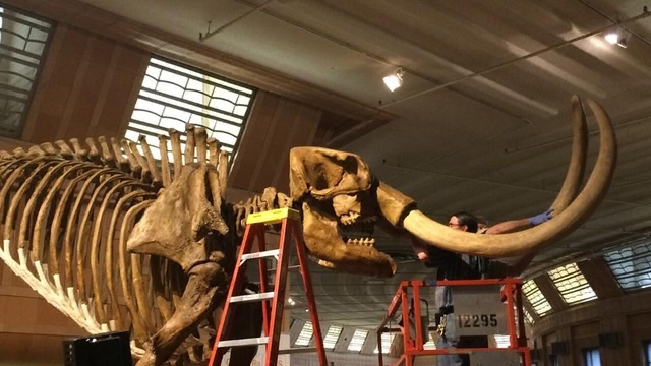 'Mammoth' renovations at Cincy Museum Center