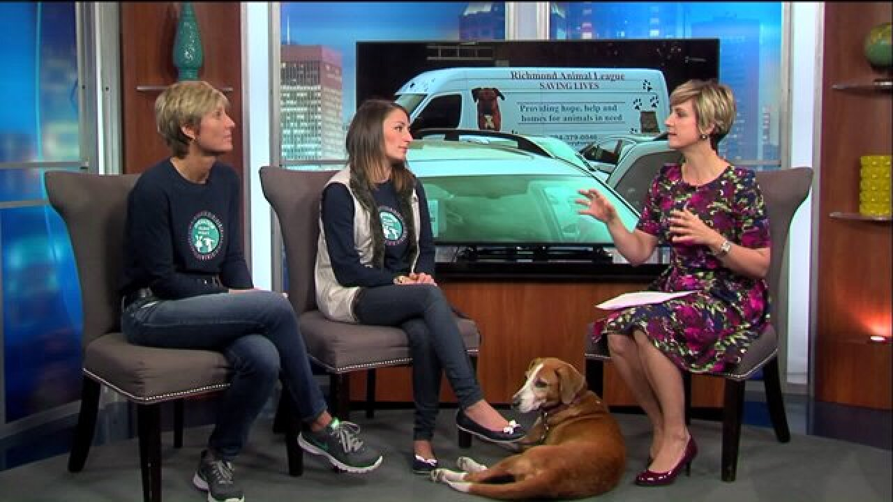 Give a furry friend a home for theholidays