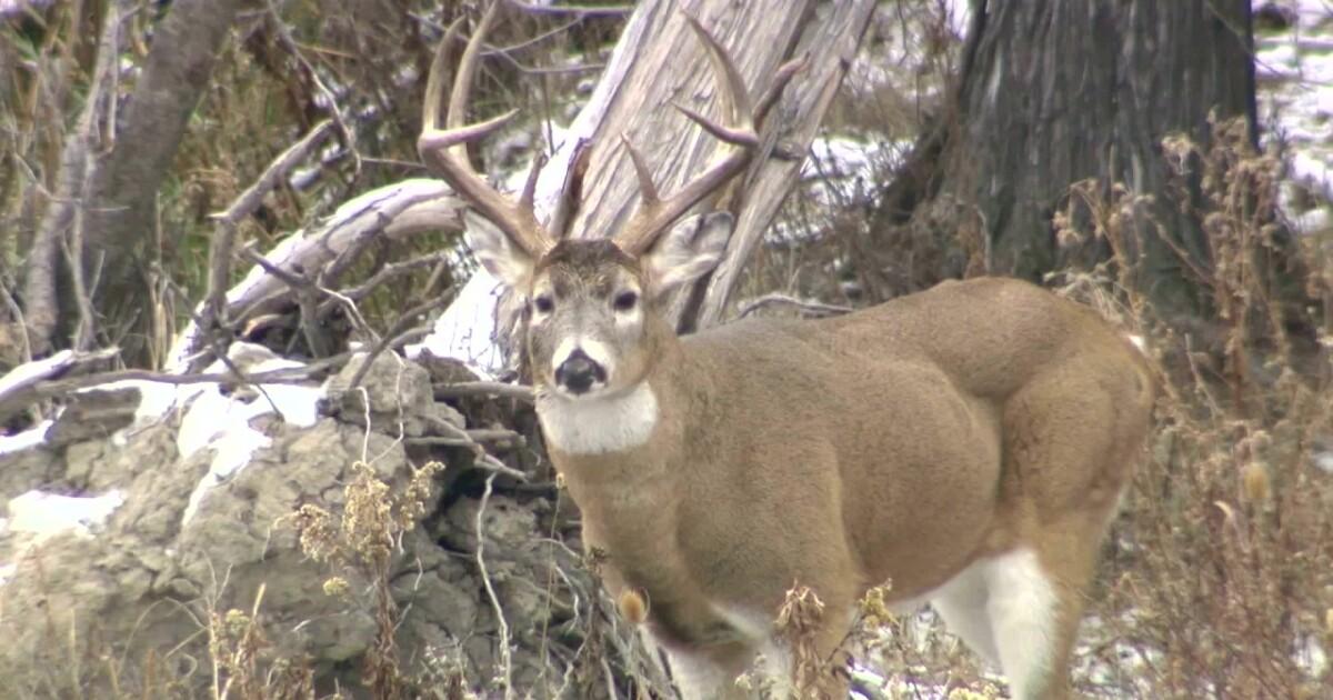Youth deer hunt underway in Montana