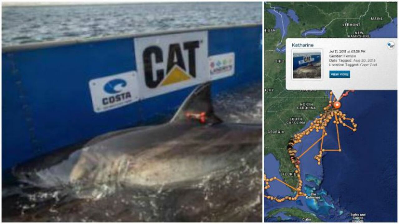 14 Foot Great White Shark Katharine Surfaces Off Outer Banks Coast