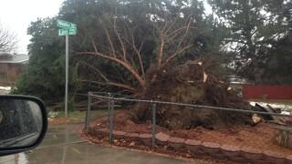 Photos: Microburst winds topple trees inMurray