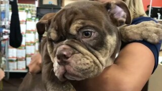 Surveillance footage captured the moment two men allegedly stole a puppy from a pet store in Pembroke Pines on Feb. 21, 2020.
