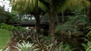 Mounts Botanical Garden opens 'Floating World'