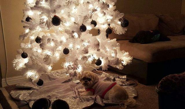 PHOTOS: Las Vegas pets in the holiday spirit