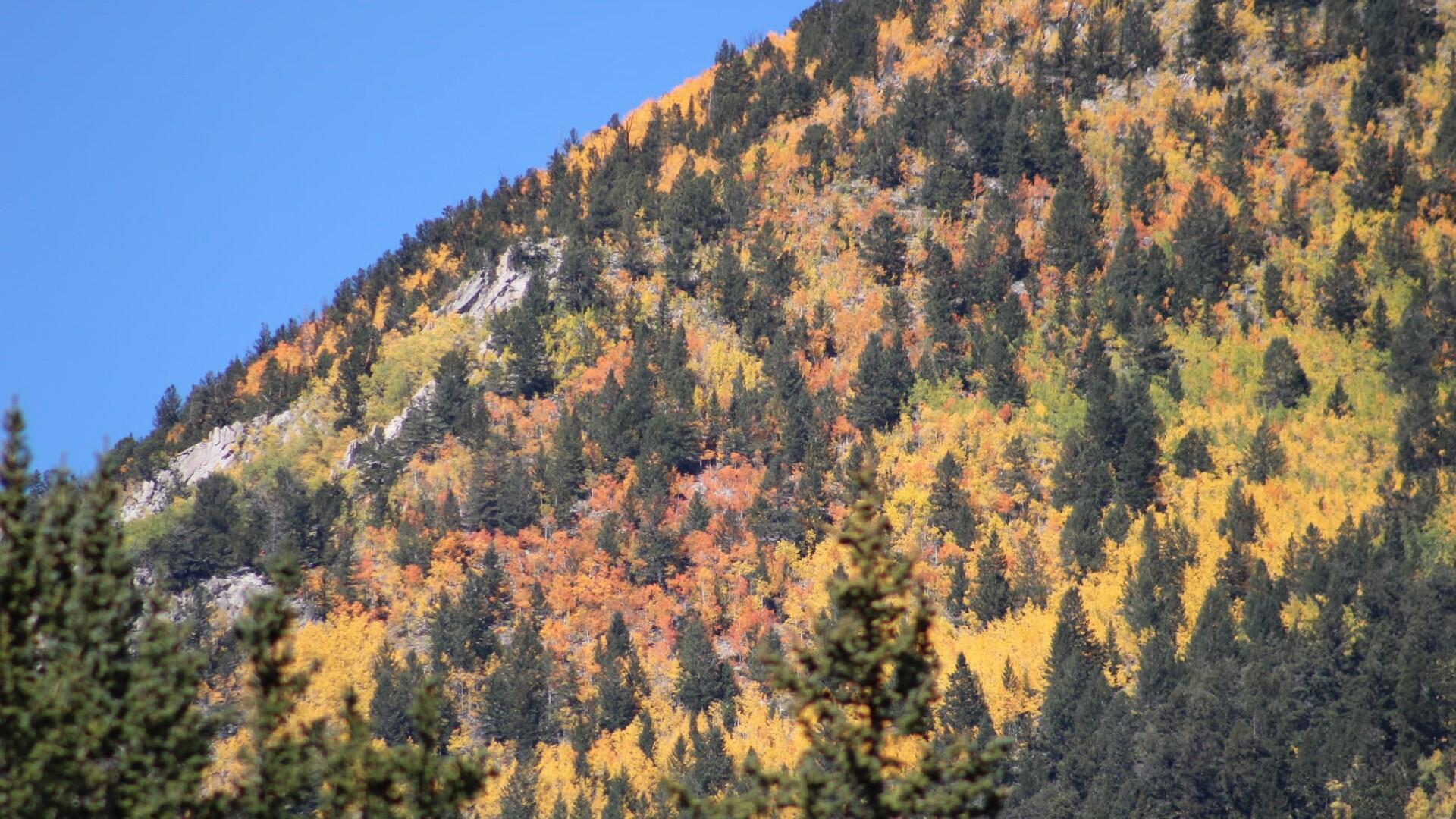 Nathrop Colorado Verna Toller.jpg