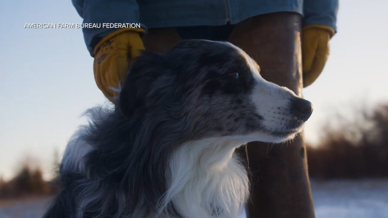 Montana Ag Network: Farm Bureau seeking Farm Dog of the Year nominations
