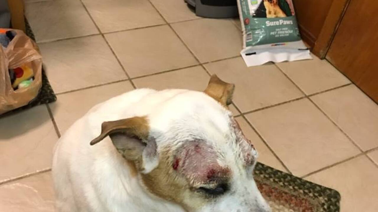 Family's dog injured at PetSmart, says management offered up different stories on how it happened
