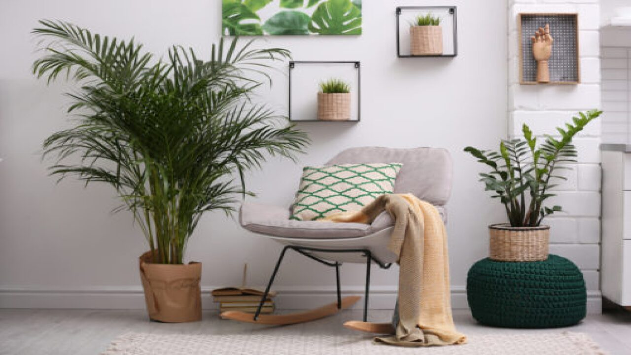 6 Of The Trendiest Houseplants Of 2021