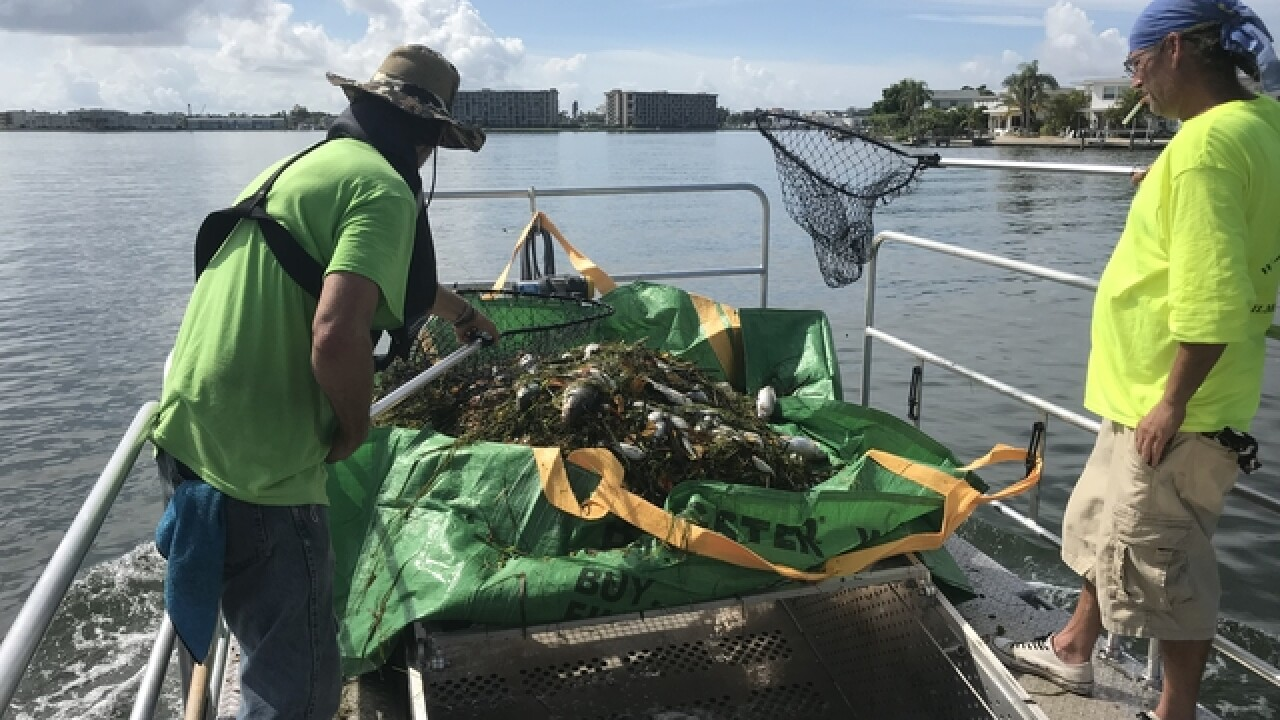 17 tons of dead fish collected in Pinellas Co.