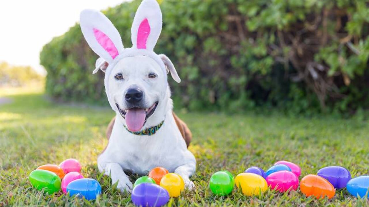Dog Easter Egg Hunt at Brown County Dog Park this weekend