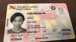 maryland real id sample