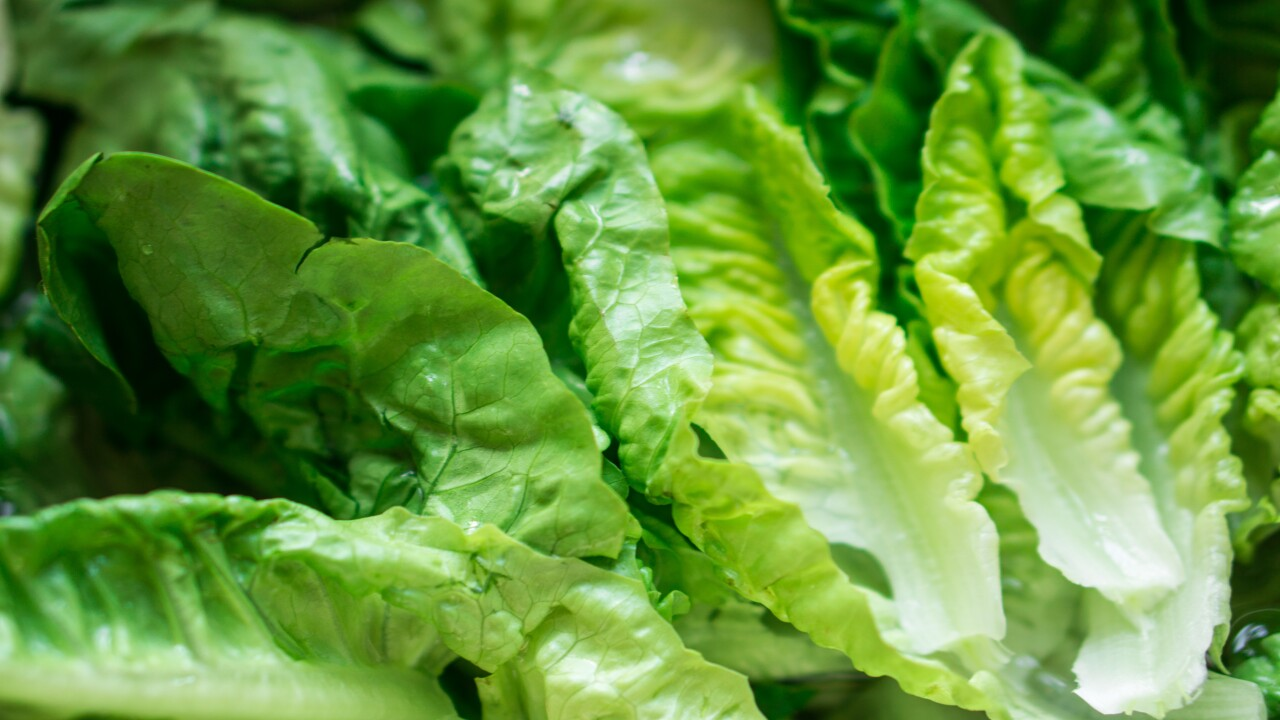 Nearly 100,000 pounds of packaged salad are being recalled for E. coli concerns