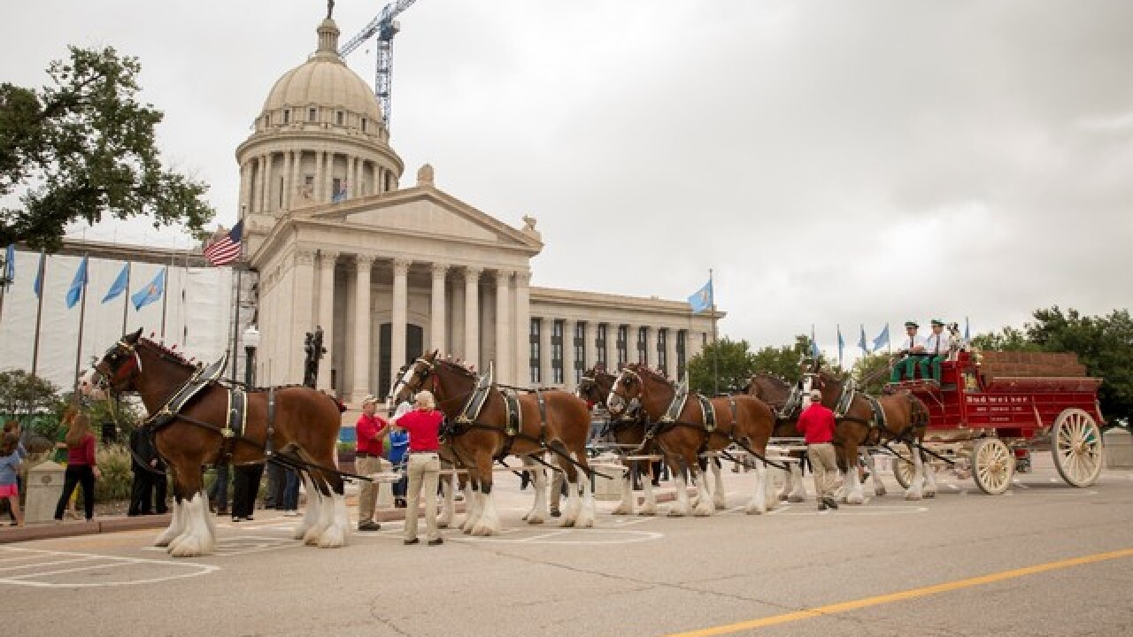 Budweiser Clydesdales visit Oklahoma Capitol as state modernizes beer laws