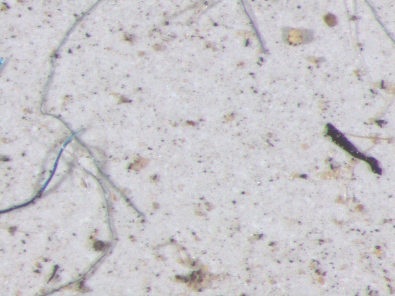 microplastic under the microscope