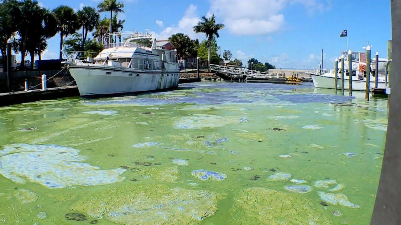 Toxic algae at the Pahokee Marina on April 30, 2021