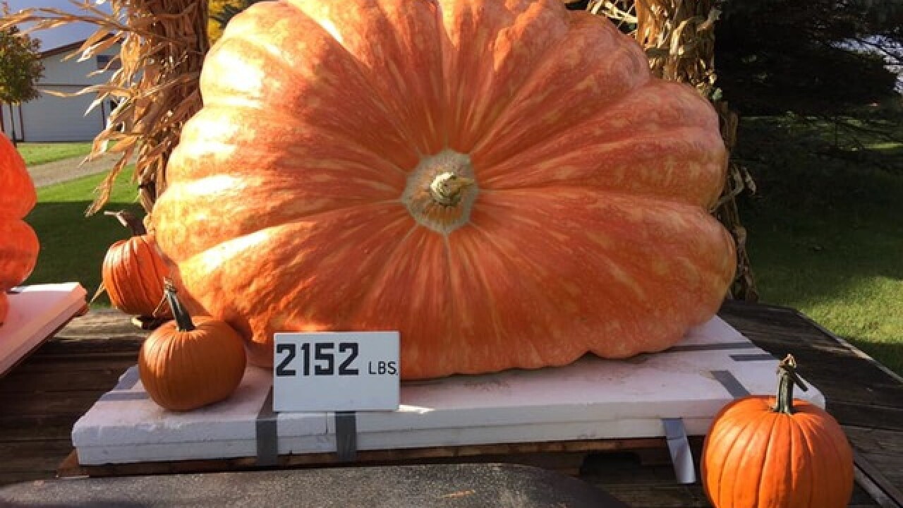 Pumpkin grown in Wisconsin weighs 2,152 lbs