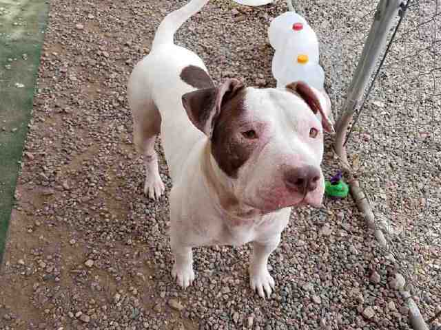 PHOTOS: 20 pets up for adoption in the Valley (11/13)